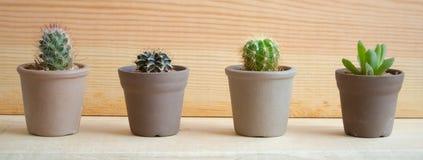 Вид кактусов Стоковые Фото