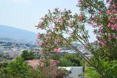 Вид на город в Афинах, Греции Стоковые Изображения RF