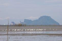 Вид на море с белой птицей Стоковые Фотографии RF