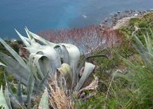 Вид на океан в Италии Стоковое Фото