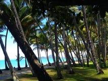 Вид на океан и пальмы стоковое фото rf
