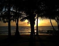 Вид на океан и пальмы стоковые изображения rf