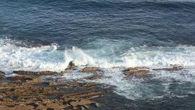 Вид на океан от берега сток-видео