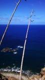 Вид на океан Стоковые Изображения RF