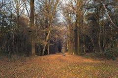 Вид сзади женщины идя в лес Needse Achterveld зимы Стоковое Изображение