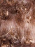 Вид сзади мальчика волос предпосылки белокурое курчавое красное, текстура Стоковые Фото
