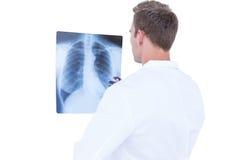 Вид сзади молодого доктора смотря рентгеновский снимок Стоковое Изображение