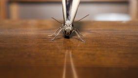 Вид спереди тропической бабочки сыча Стоковые Фотографии RF