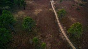 Вид с воздуха грунтовой дороги в лесе pind в северной Таиланда Стоковые Изображения RF