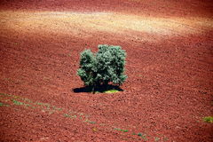 Вид с воздуха дерева на коричневом earthy поле Стоковое Изображение RF