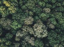 Вид с воздуха леса Стоковая Фотография RF