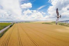 Вид с воздуха летящей птицы Стоковые Фото