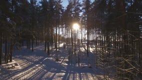 Вид с воздуха захода солнца в древесине между деревьями напрягает в зимнем периоде видеоматериал