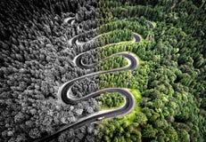 Вид с воздуха извилистой дороги в лесе Стоковое Изображение RF