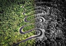 Вид с воздуха изогнутой дороги в лесе Стоковые Фото