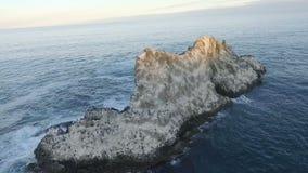вид с воздуха камера летает вокруг острова в океане на котором сидите птицы акции видеоматериалы