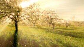 Вид с воздуха красивых деревьев весны солнце испуская лучи предпосылка светового эффекта сток-видео