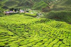 Вид с воздуха к плантации чая Стоковое Изображение