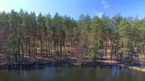 вид с воздуха Летать над красивыми лесными деревьями Съемка воздушной камеры акции видеоматериалы