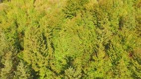 вид с воздуха Летающ над горой и красивой съемкой воздушной камеры леса, горные вершины Австрии сток-видео