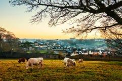 Вид с воздуха маленького города Cashel в Ирландии на заходе солнца Стоковые Изображения RF