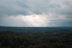 Вид с воздуха над зеленым лесом в вечере Пасмурная тайна Ландшафты Латвии Стоковое Фото