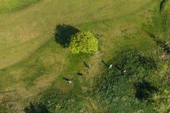 Вид с воздуха над полем гольфа Стоковые Изображения RF