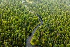 Вид с воздуха обилия разнообразий дерева и другой вегетации зацветая на реке на taiga в лете Стоковое Фото