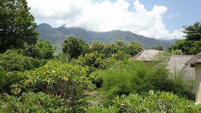 Вид с воздуха от высоты через листву тропических деревьев на горах Индонезия тюкованный видеоматериал