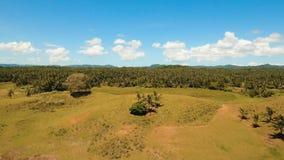 Вид с воздуха поля риса Филиппины, Siargao акции видеоматериалы