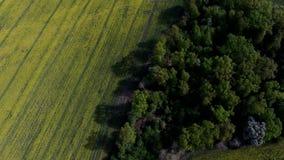 Вид с воздуха поля сверху весной стоковая фотография