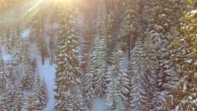 Вид с воздуха древесин леса деревьев Сезон зимы снега красивейшая природа сток-видео