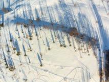 Вид с воздуха редкого леса, длинные тени стоковая фотография