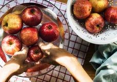 Вид с воздуха рук моя яблока в шаре Стоковое Изображение