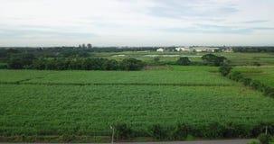 Вид с воздуха сахарного тростника или земледелия в сельском Таиланде сток-видео
