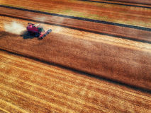Вид с воздуха сбора машины земледелия жатки зернокомбайна Стоковые Изображения