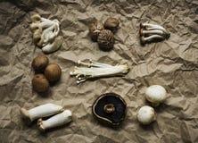 Вид с воздуха собрания различного свежего органического гриба установленного Стоковое Фото
