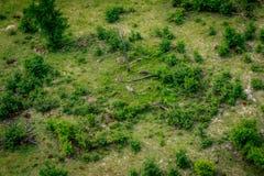 Вид с воздуха табуна зебр в Okavango Стоковые Фотографии RF