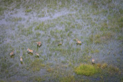 Вид с воздуха табуна зебр Стоковое фото RF