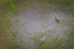 Вид с воздуха табуна зебр Стоковое Изображение