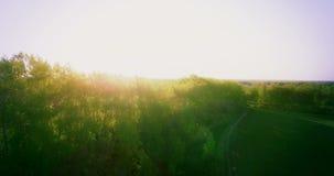 вид с воздуха 4k Низкий полет над полем зеленой и желтой пшеницы сельским видеоматериал