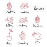 виды ягод различные Стоковое Изображение