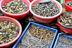Виды seashell в рынке Стоковые Изображения