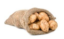 вкладыш картошек хлебоуборки мешковины сырцовый Стоковая Фотография RF