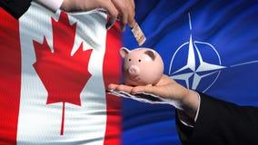 Вклад в НАТО, рука Канады кладя деньги в piggybank на предпосылку флага акции видеоматериалы