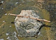 Включенный сахарный тростник Стоковое Изображение RF