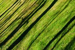 Вкосую тени деревьев на лужайке Стоковые Фото