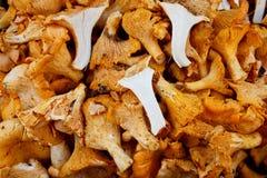 вкусное гриба лисички органическое Стоковое Изображение RF