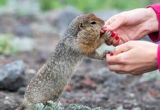 Вкусное обслуживание для диких животных Стоковое фото RF