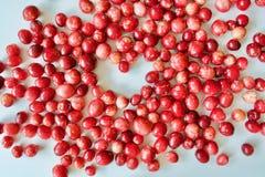 Вкусные и здоровые красные клюквы Стоковое Фото